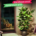 kamerplanten bij de korenbloem